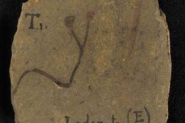 Nejstarší cévnaté suchozemské rostliny a palynomorfy ze siluru a spodního devonu Barrandienu, Česká republika