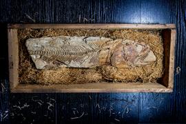 Paleontologická sbírka