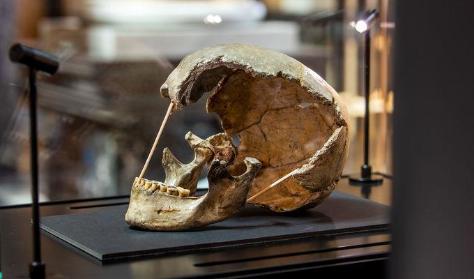 Nejstarší genom moderního člověka byl objeven v Národním muzeu