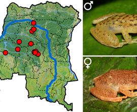 Objev nového rodu žáby z Konga